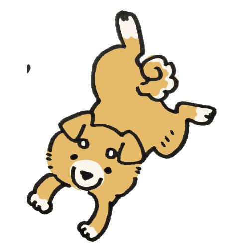 ぴょんと飛ぶ柴犬