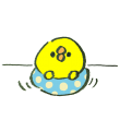 浮き輪でプカプカ浮かぶひよこ