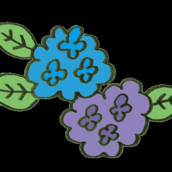 6月の定番の花アジサイのイラスト