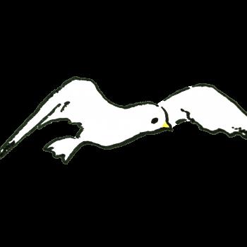 カモメのイラスト