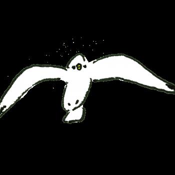 正面向いて飛ぶカモメのイラスト