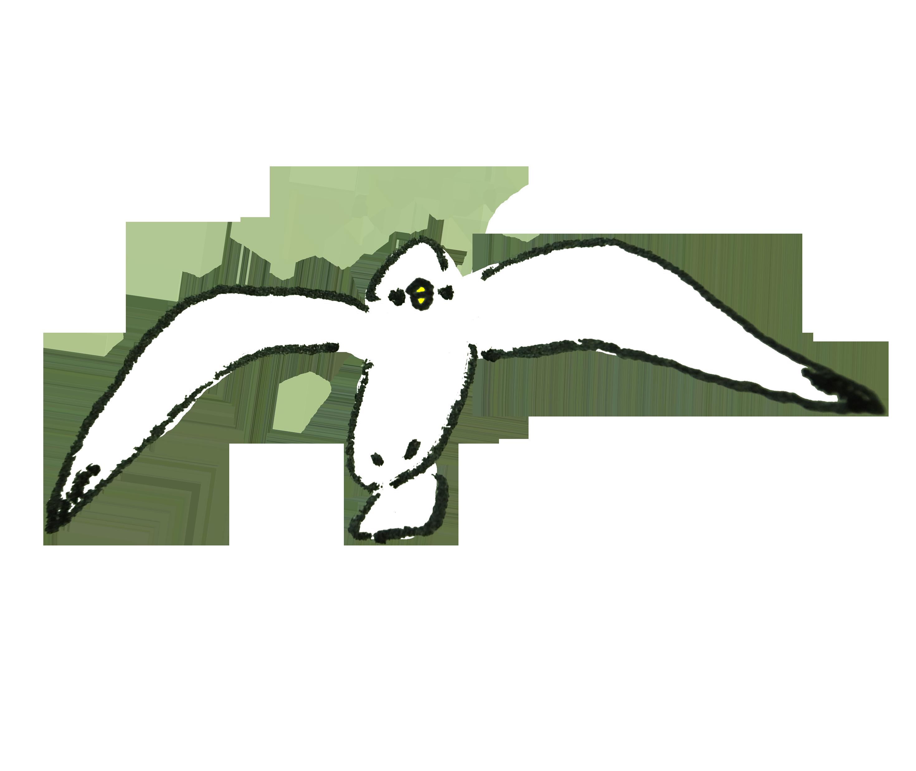 正面向いて飛ぶカモメ