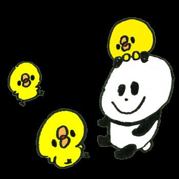 ひよこと仲良しのパンダのイラスト