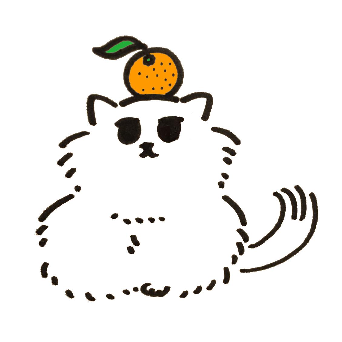 みかんを頭の上に乗せるチンチラシルバーの猫
