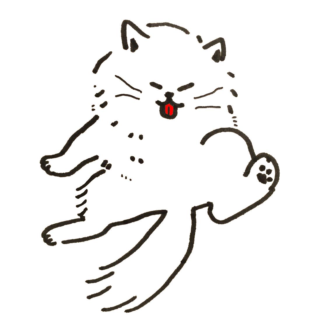 毛づくろい(グルーミング)をするチンチラシルバーの猫