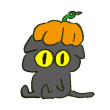 ハロウィンにとりあえずかぼちゃをかぶってみる黒猫