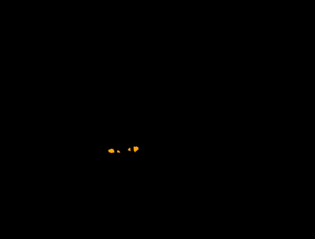 尻尾を立てて威嚇する黒猫