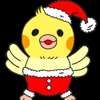 サンタになったオカメインコのヒナ(GIFアニメ)