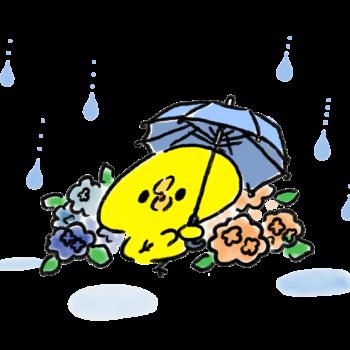 雨降りの中傘をさしながらおどるひよこ
