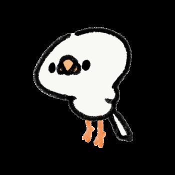 伸びをする文鳥