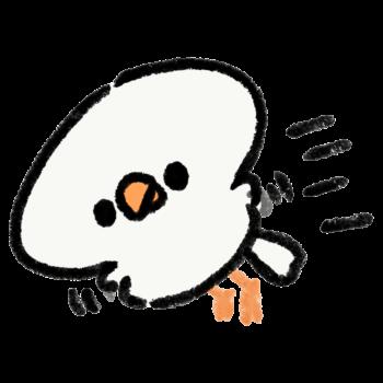 飛び回る白文鳥